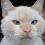 Widget, Bessy Beck trout Fishery's rescue cat